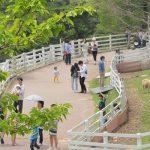 【兵庫】六甲山牧場は家族連れに大人気!GWなどの連休は駐車場渋滞にご注意を!