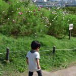【兵庫】神戸総合運動公園でコスモス満喫!2人目出産前の最後のおでかけかな・・・?