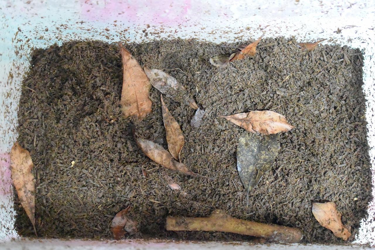 カブトムシの飼育方法卵
