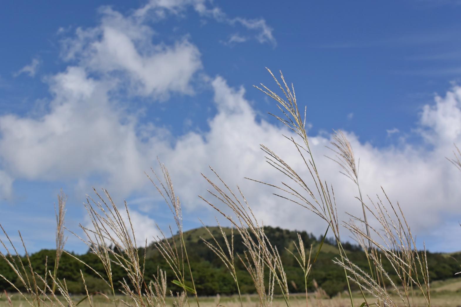 長野県霧ヶ峰高原八島湿原:秋の景色