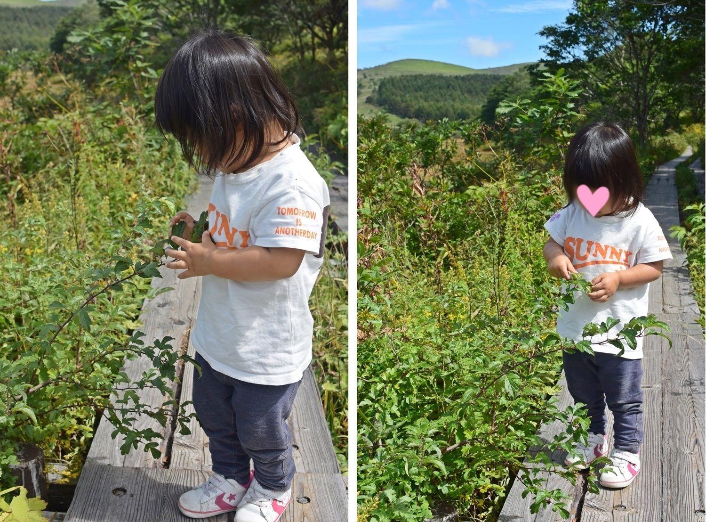 霧ヶ峰高原八島湿原:花を見つめる娘2