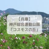 兵庫神戸総合運動公園コスモスの丘