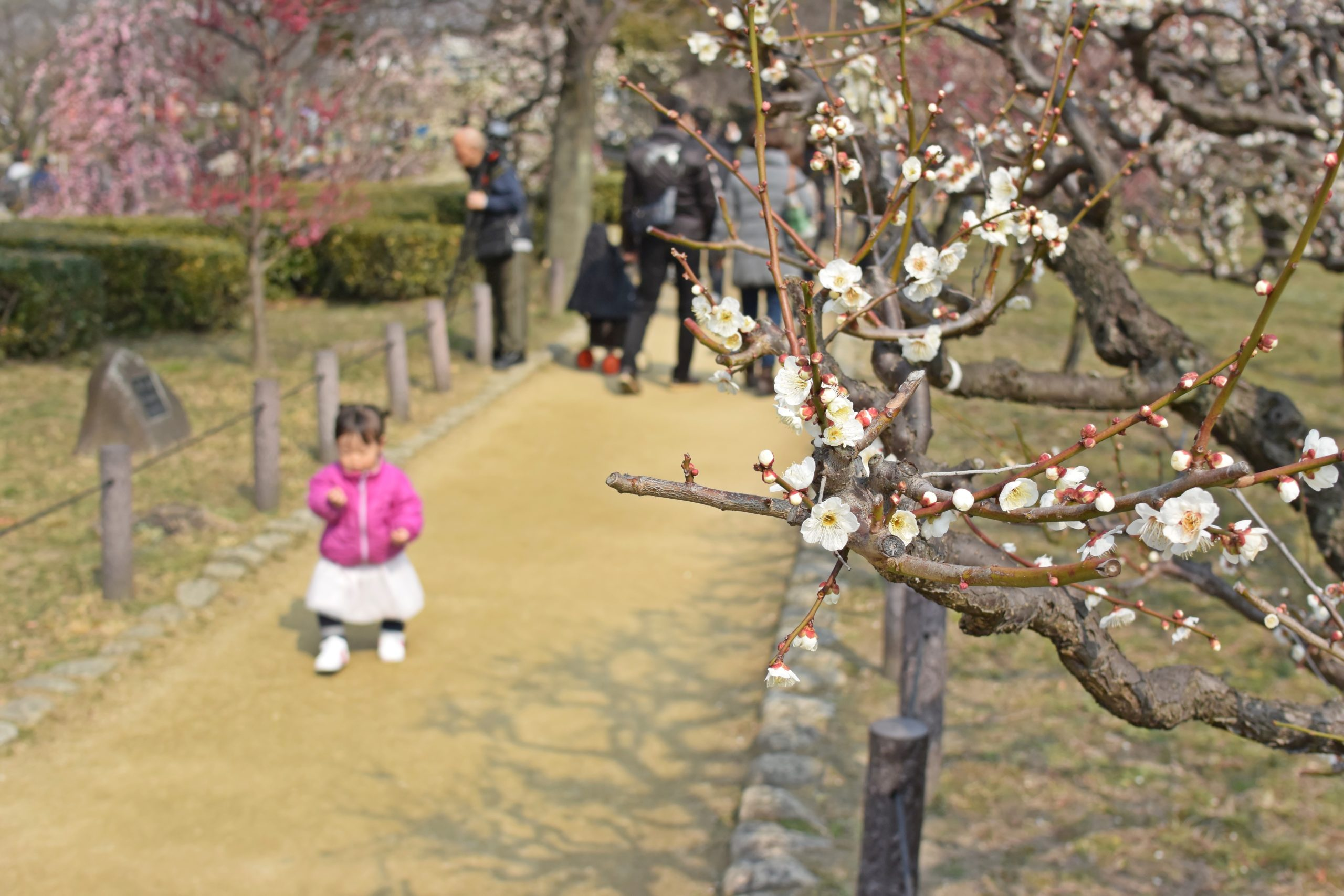 大阪城公園の梅林の見ごろはいつ?気になる最新開花情報