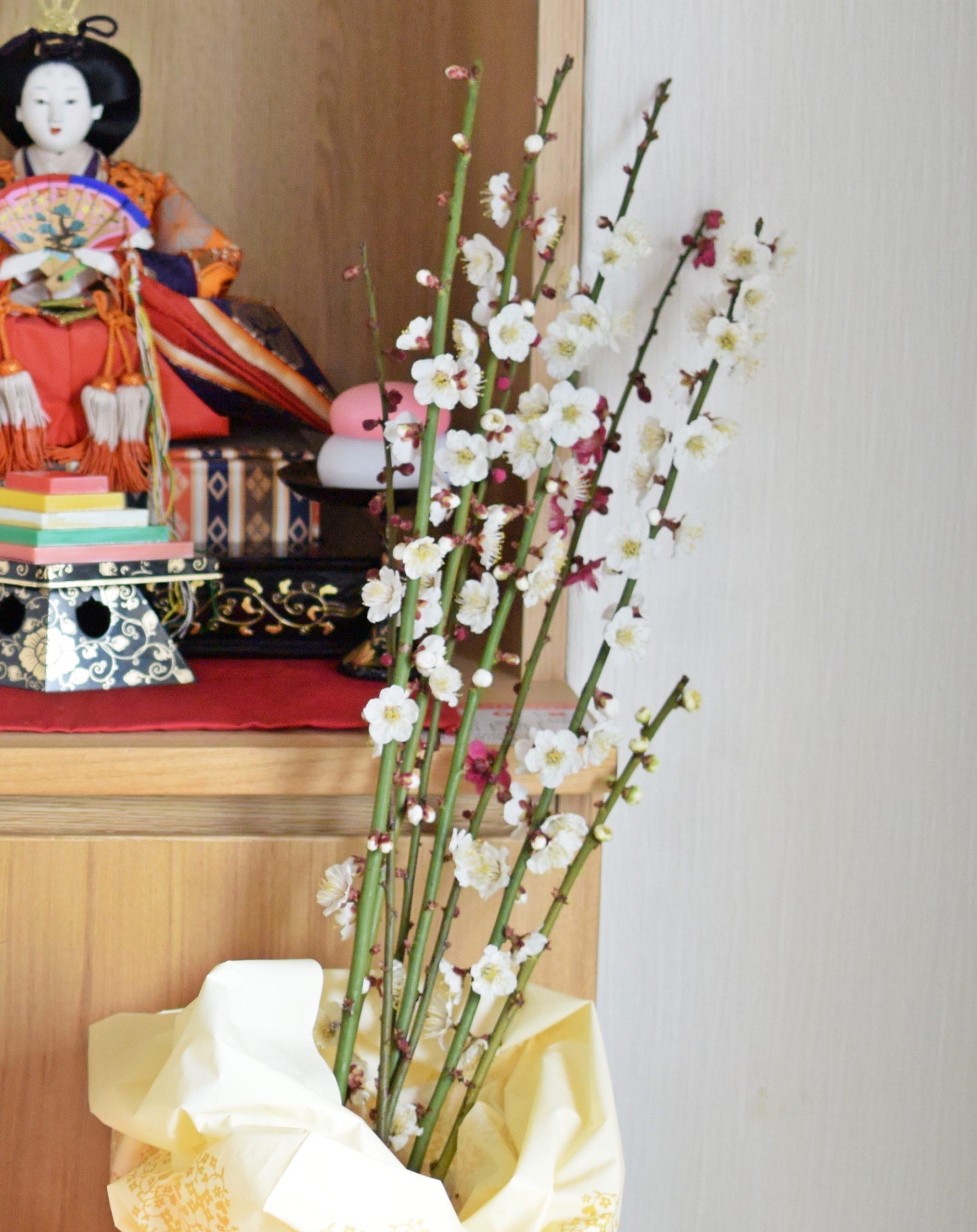 和歌山「南部梅林」の見ごろはいつ?気になる最新開花情報