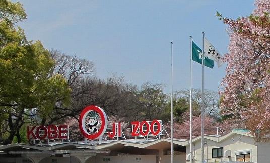 神戸の王子動物園にはパンダがいるよ!日本でパンダを見られる動物園はたったの3つ