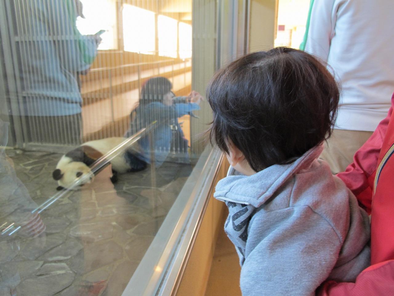 王子動物園のパンダ旦旦たんたん