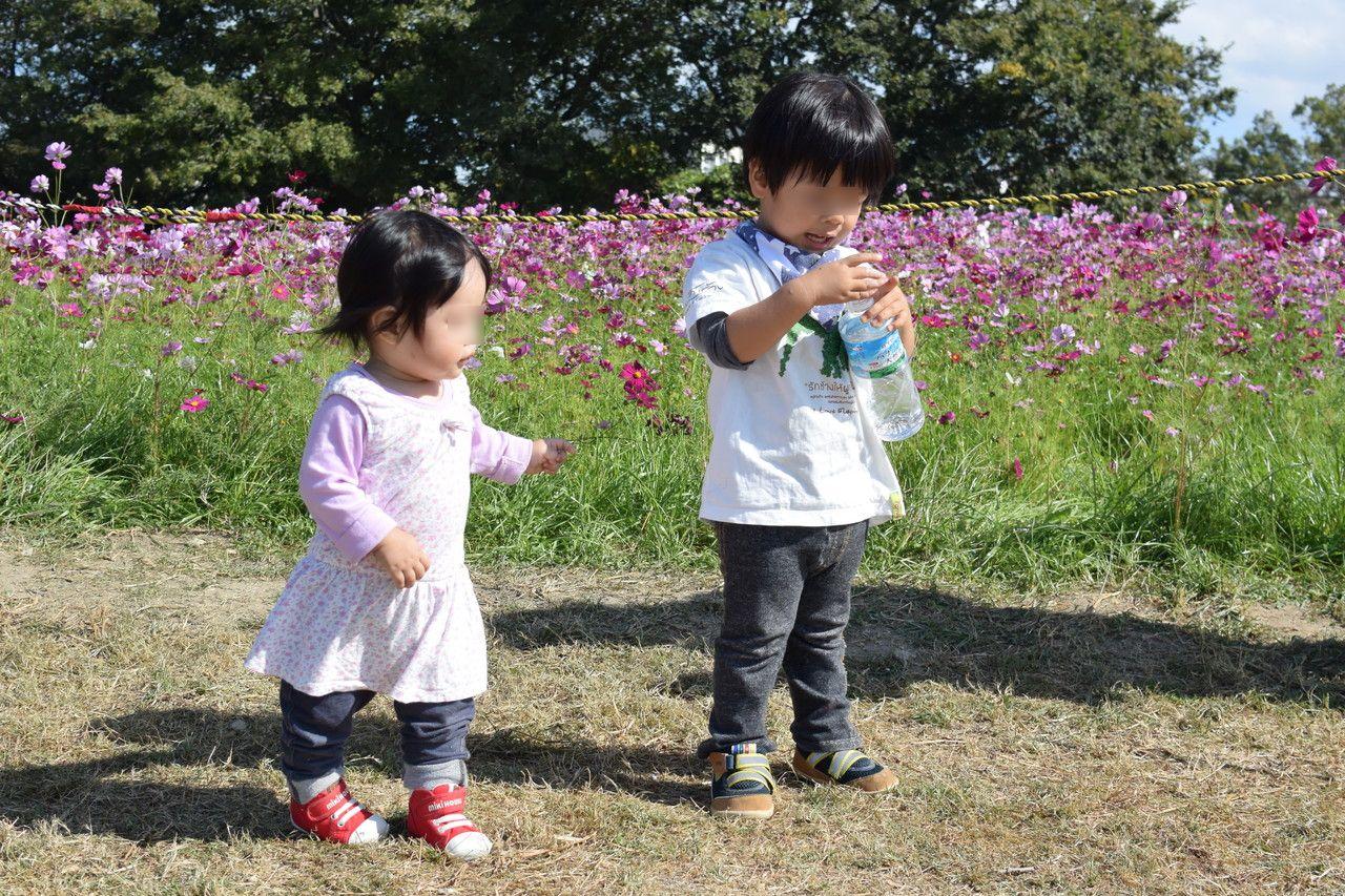 武庫川髭の渡しコスモス園