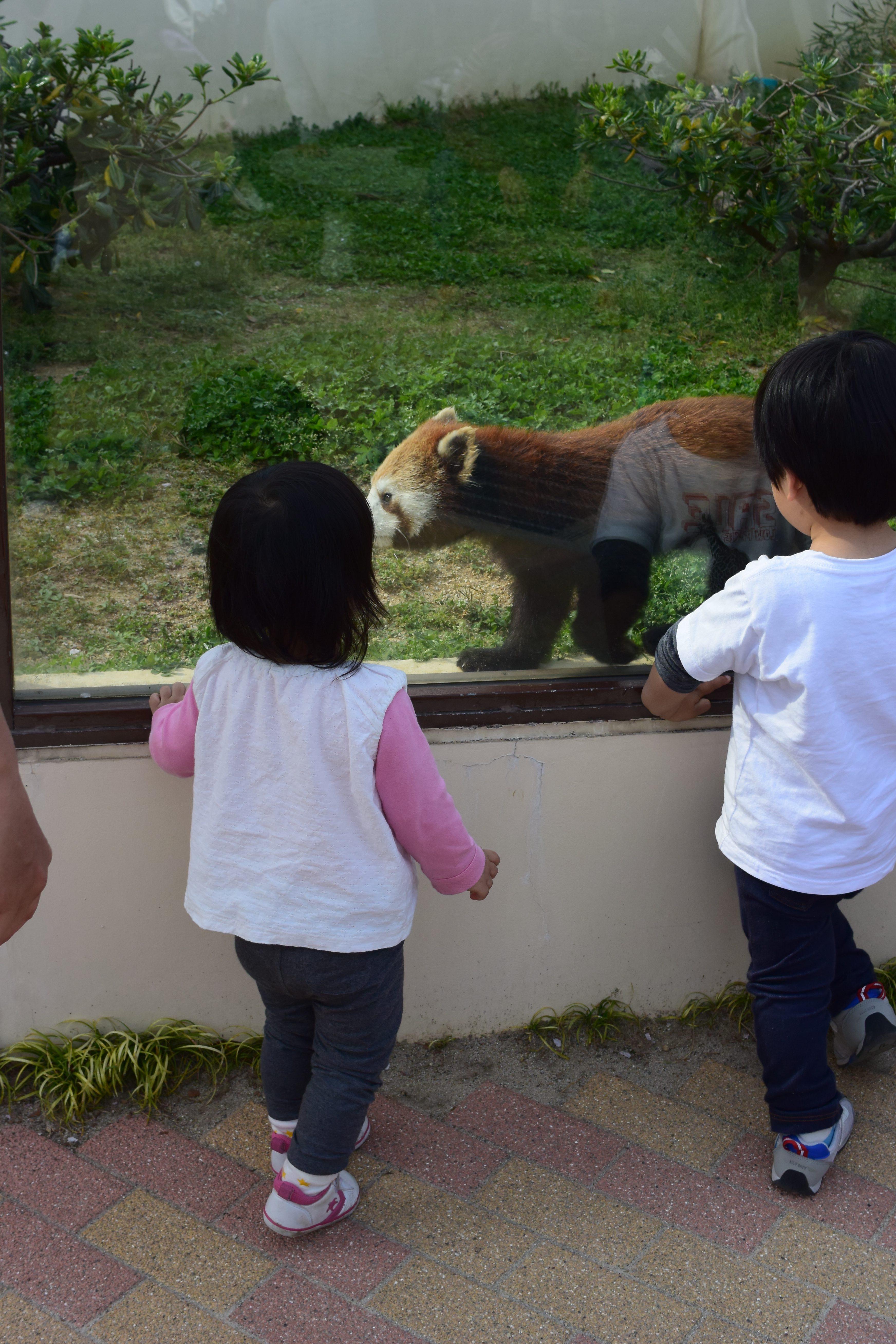 ゴリラ好き必見!京都市動物園は関西には少ないゴリラがいる動物園だよ