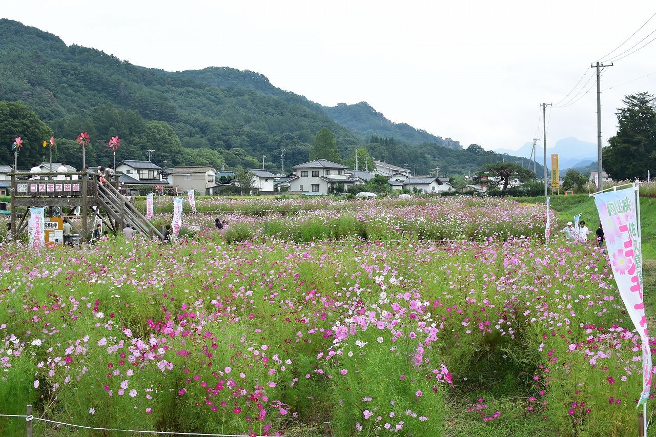 【2018年】佐久高原コスモス祭りとコスモス街道の見ごろはいつ?開花状況と開園期間について【長野】