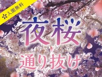 【2018年】王子動物園の夜桜の通り抜けはいつ?ライトアップと桜吹雪が幻想的な夜桜を楽しもう