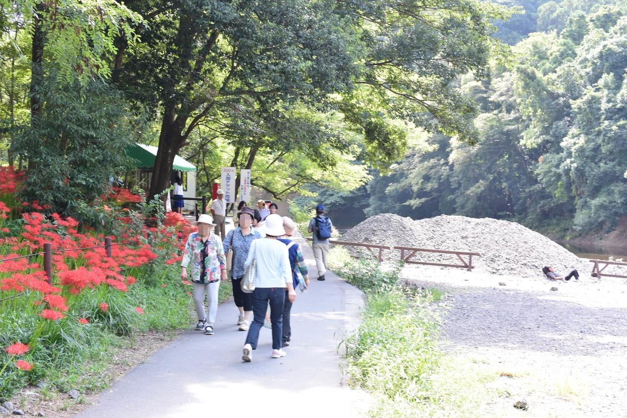 巾着田曼珠沙華公園の入り口付近