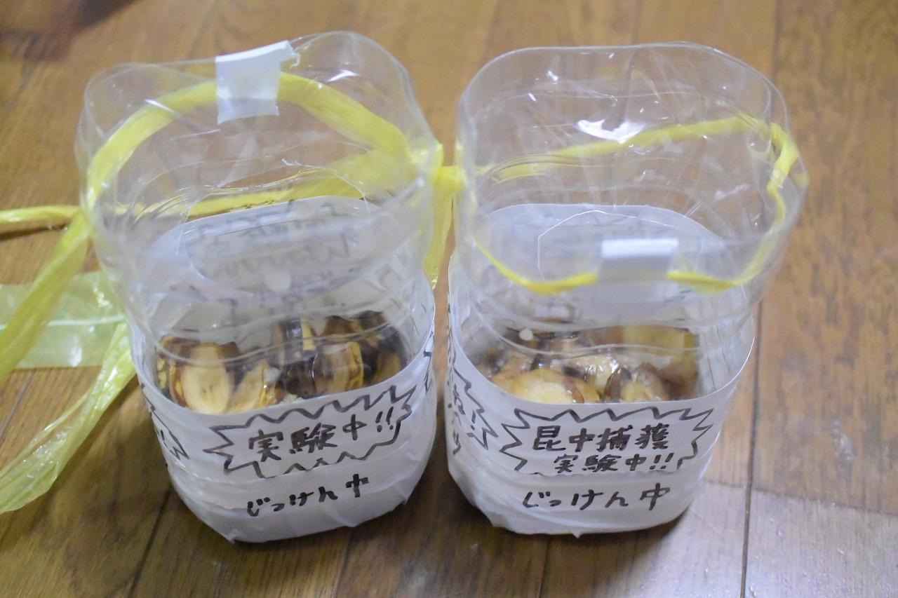 カブトムシ捕獲用バナナトラップ一回目ペットボトルバージョン