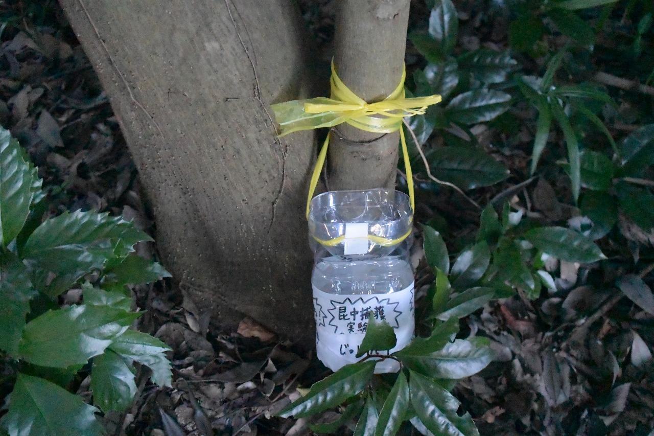 カブトムシ捕獲用バナナトラップを仕掛けた場所