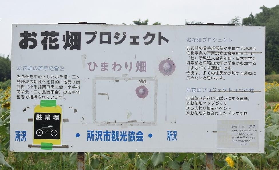 所沢ひまわり畑