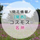 【2019年】関西コスモスの名所9選|秋のお出かけにおすすめ!子どもと一緒に見に行こう