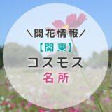 【2021年】関東コスモスの名所9選|秋のお出かけにおすすめ!子どもと一緒に見に行こう