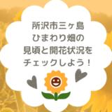 所沢市三ヶ島のひまわり畑