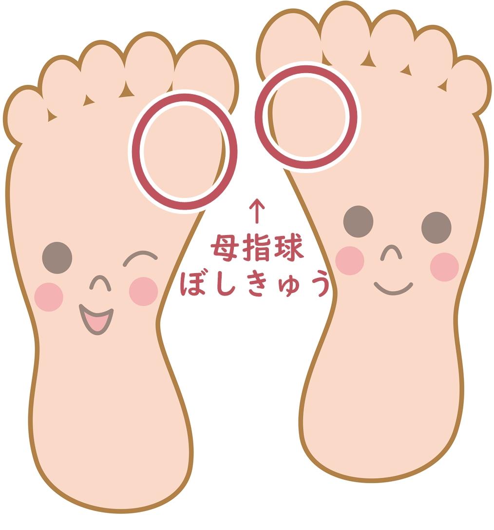 足の裏の母指球
