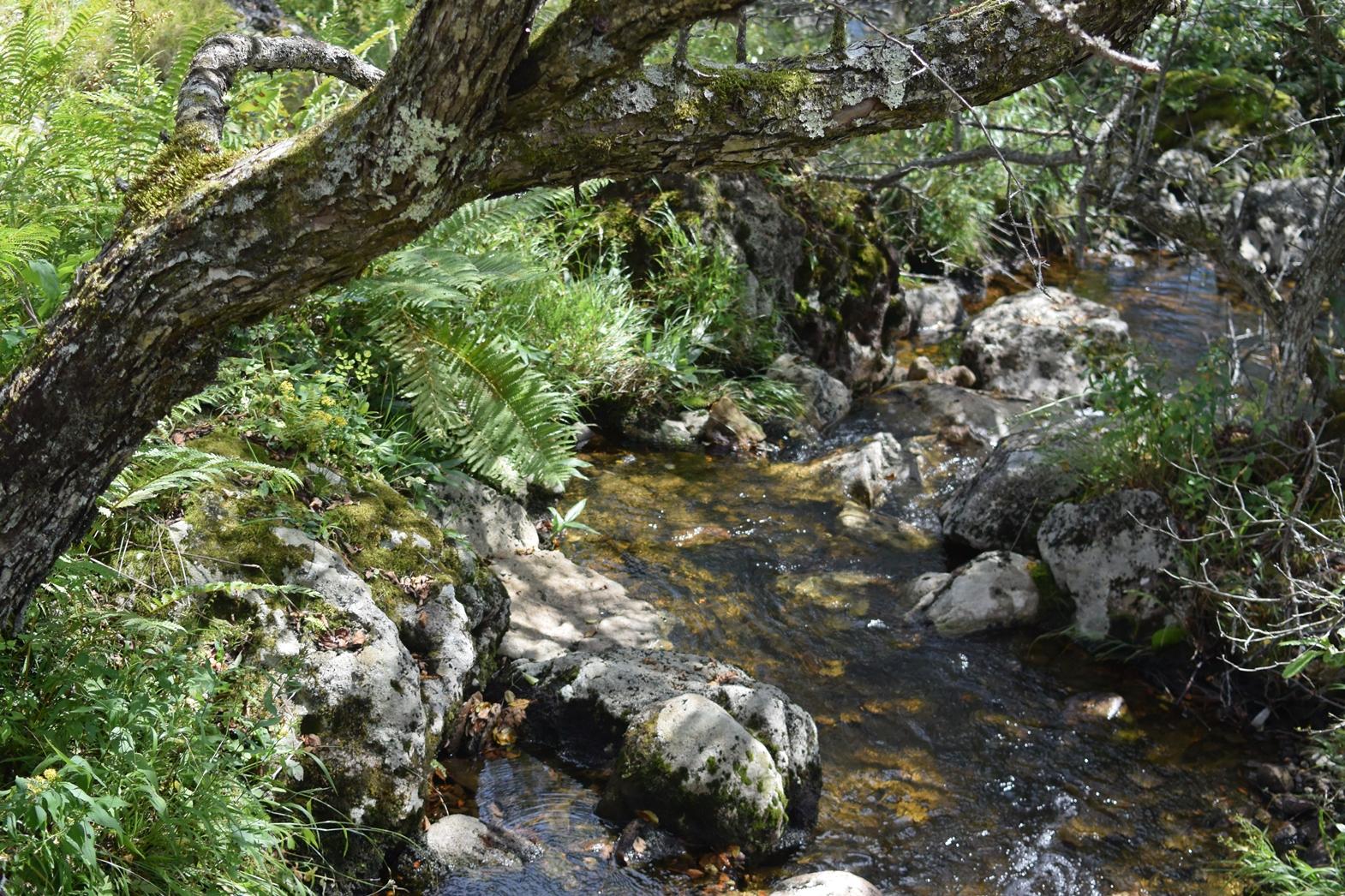 長野県霧ヶ峰高原八島湿原:綺麗な水場