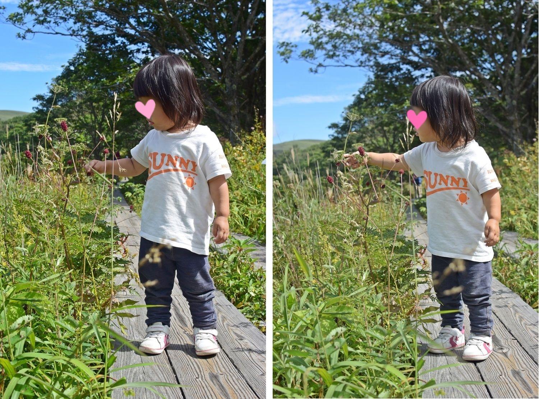 霧ヶ峰高原八島湿原:花を見つめる娘1
