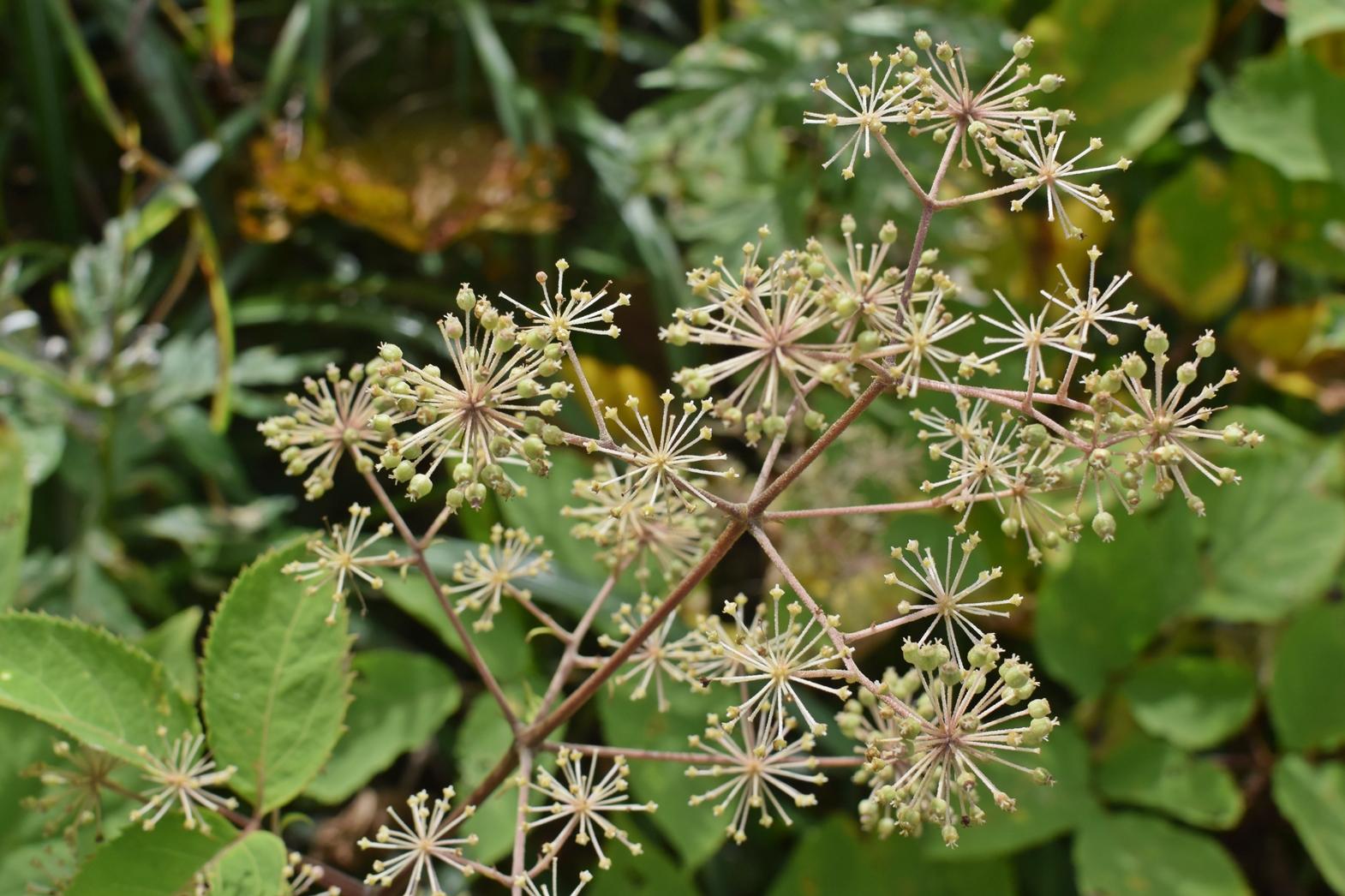 霧ヶ峰高原八島湿原:植物