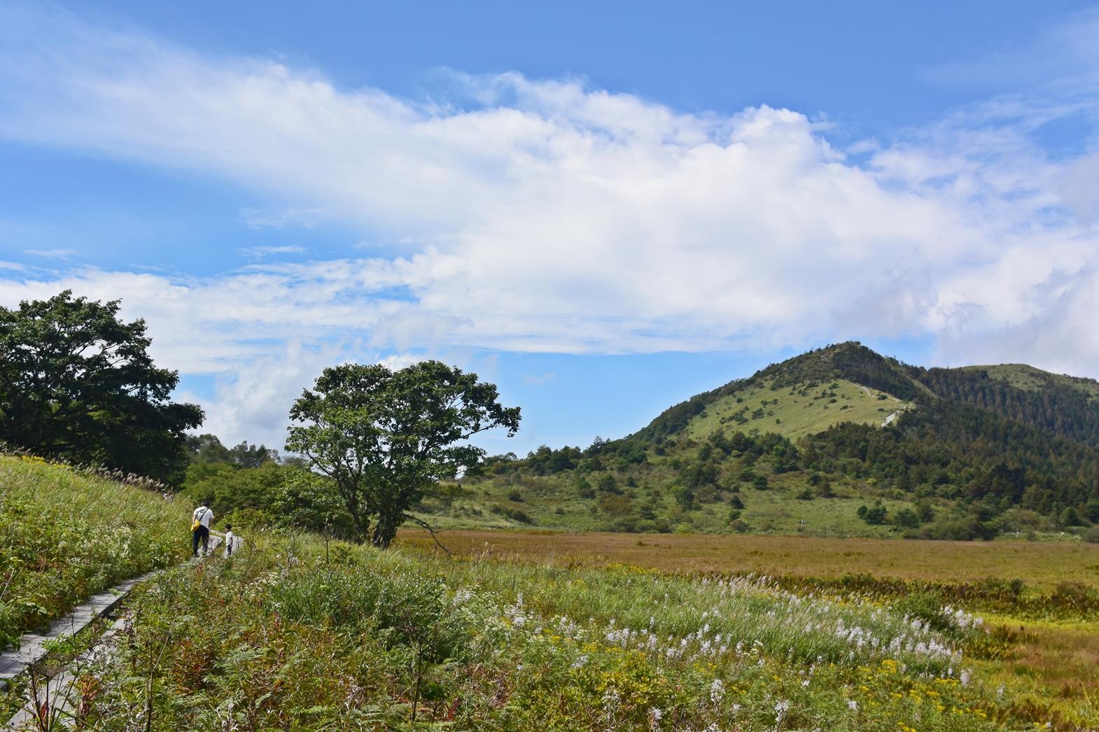 霧ヶ峰高原八島湿原:元気に進む兄