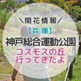 【兵庫】神戸総合運動公園でコスモス満喫してきたよ~!