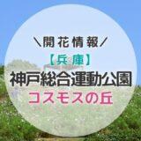 【2019年】関西コスモスの名所!神戸総合運動公園「コスモスの丘」の見頃と開花状況|秋のおすすめお出かけスポット