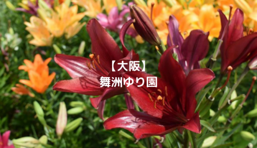 【大阪】見ごろの舞洲ゆり園で大人はうっとり!子供は○○に夢中で大喜び!