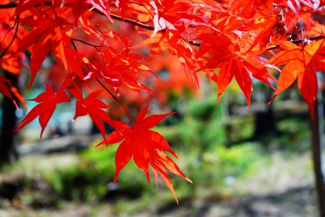 埼玉秩父の長瀞の紅葉