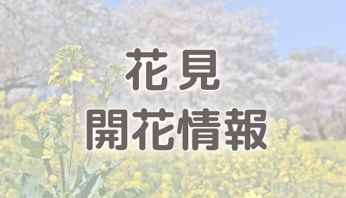 お花見・開花情報
