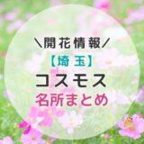 【2021年】埼玉県コスモスの名所7選|秋のお出かけにおすすめ!子どもと一緒に見に行こう