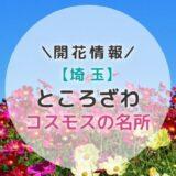 【2021年】所沢コスモスの名所3選|秋のお出かけにおすすめ!穴場スポットご紹介