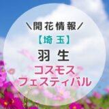 【2021年】埼玉県コスモスの名所!羽生コスモスフェスティバル|秋のおすすめお出かけスポット