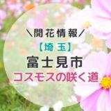 【2021年】埼玉県コスモスの名所!富士見市「コスモスの咲く道」秋のおすすめお出かけスポット