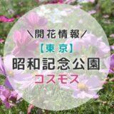 【2021年】関東コスモスの名所!昭和記念公園のコスモス|秋のおすすめお出かけスポット