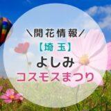 【2021年】埼玉県コスモスの名所!よしみコスモスまつり|秋のおすすめお出かけスポット